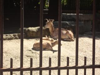 Les animaux du jardin des plantes a Paris Dsc00711