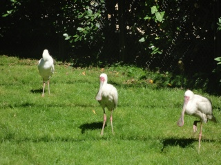Les animaux du jardin des plantes a Paris Dsc00712