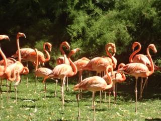 Les animaux du jardin des plantes a Paris Dsc00810