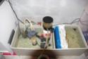 "Mon 450L ""jphlescorpion"" Imgp4322"