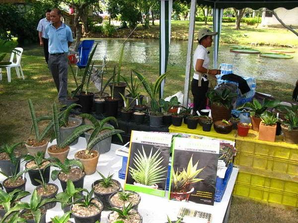 Флора фестиваль  в Тайланде 0a10