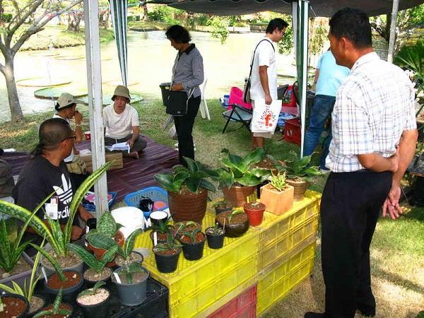 Флора фестиваль  в Тайланде 0cc10