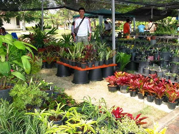 Флора фестиваль  в Тайланде Img_0910