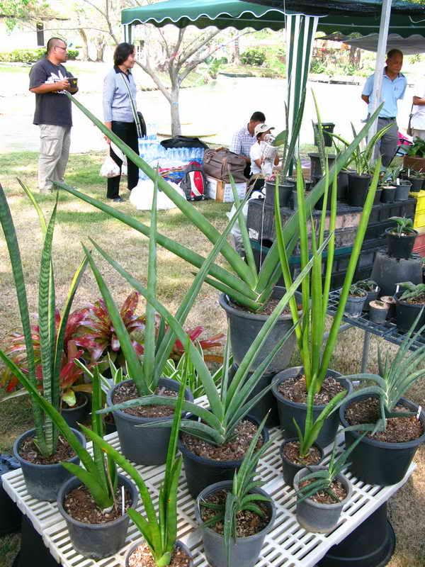 Флора фестиваль  в Тайланде Img_0915