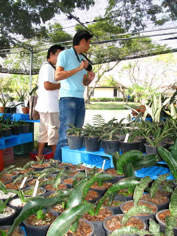 Флора фестиваль  в Тайланде Img_0916