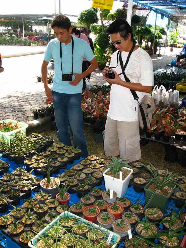 Флора фестиваль  в Тайланде Img_0922