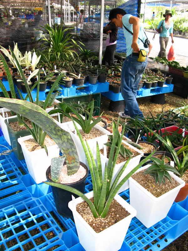 Флора фестиваль  в Тайланде Img_1010