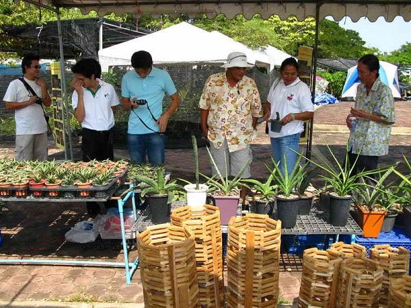 Флора фестиваль  в Тайланде Img_1011
