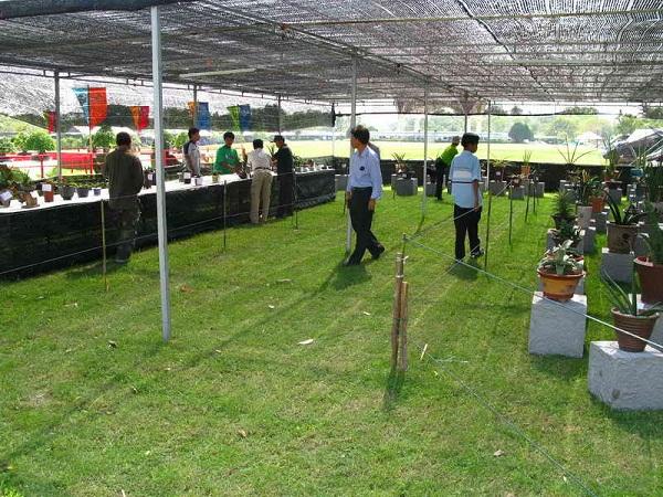 Флора фестиваль  в Тайланде Img_1013