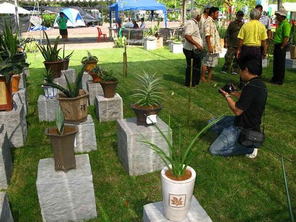 Флора фестиваль  в Тайланде Img_1030