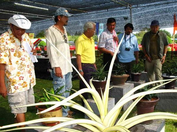 Флора фестиваль  в Тайланде Img_1031
