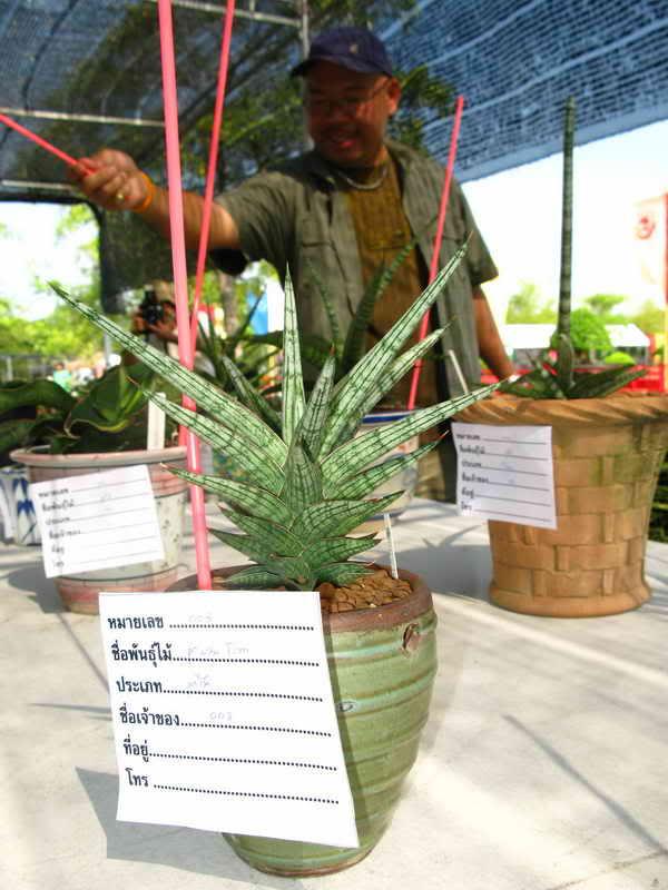 Флора фестиваль  в Тайланде Img_1113
