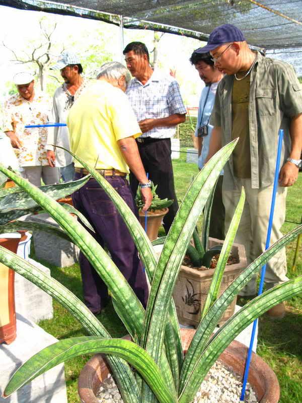 Флора фестиваль  в Тайланде Img_1118