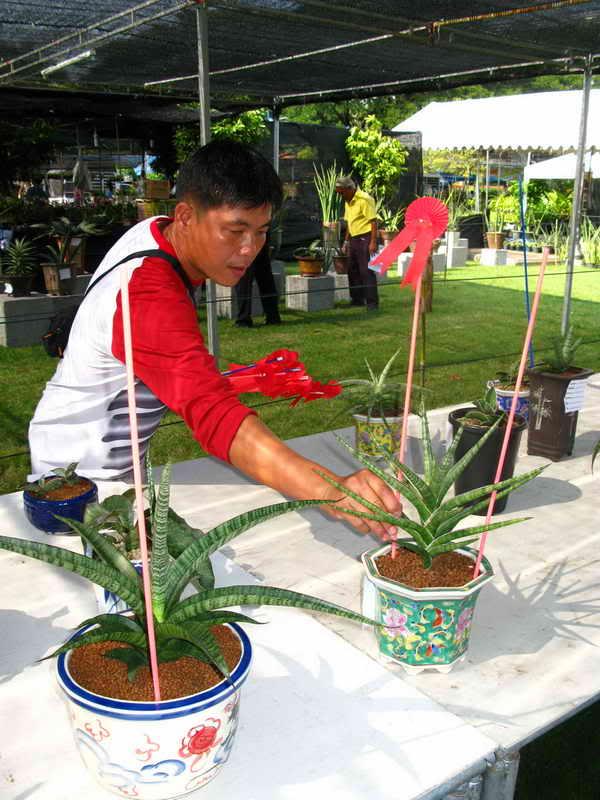 Флора фестиваль  в Тайланде Img_1120