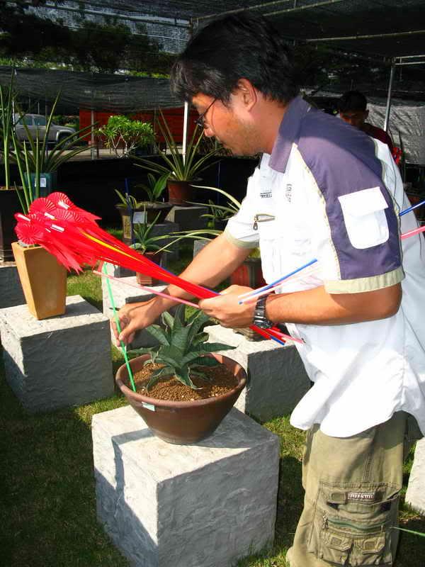 Флора фестиваль  в Тайланде Img_1123
