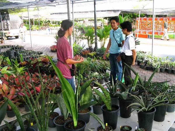 Флора фестиваль  в Тайланде Img_1127