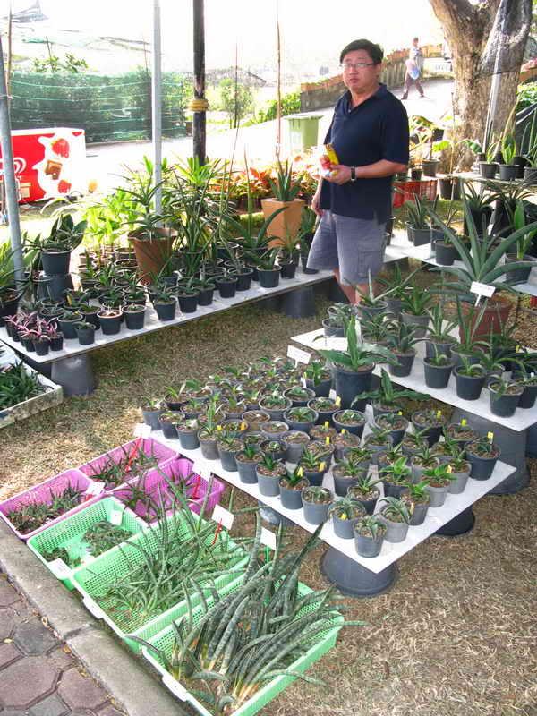 Флора фестиваль  в Тайланде Img_1212