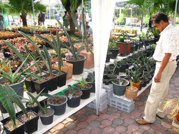 Флора фестиваль  в Тайланде Img_1215