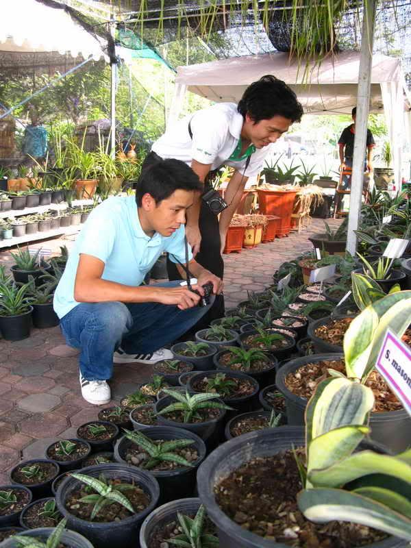 Флора фестиваль  в Тайланде Img_1217