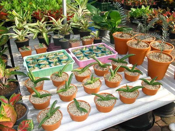 Флора фестиваль  в Тайланде Img_1218