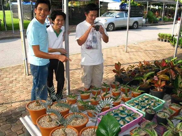 Флора фестиваль  в Тайланде Img_1219