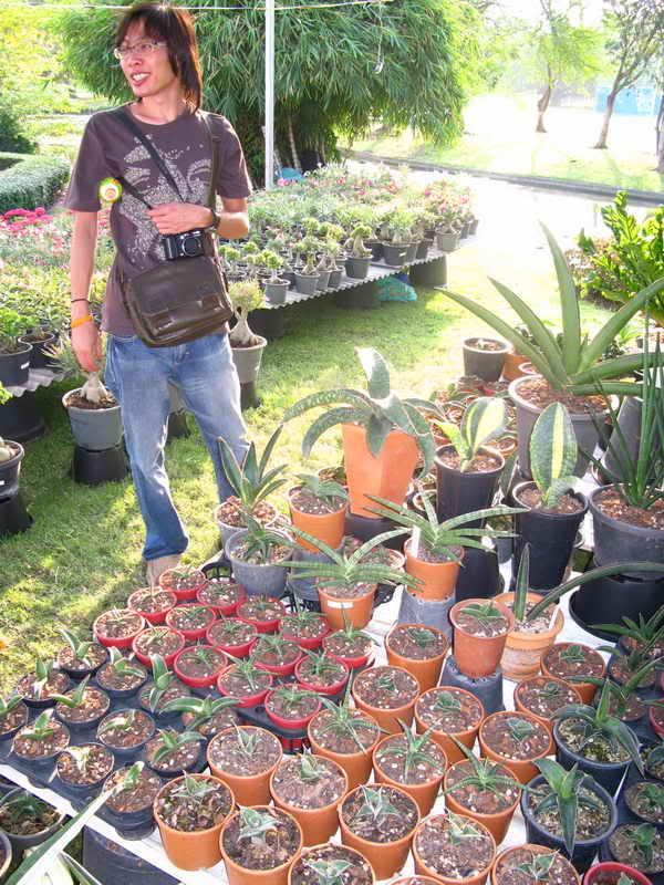 Флора фестиваль  в Тайланде Img_1317