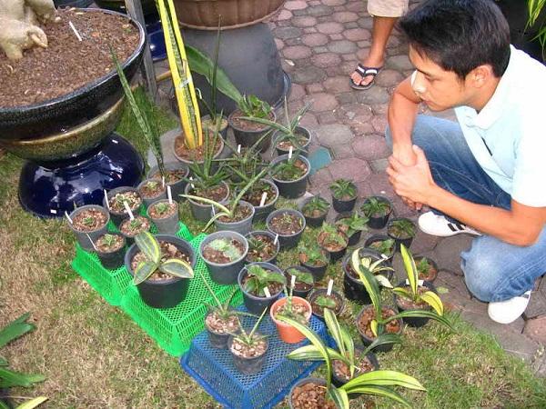 Флора фестиваль  в Тайланде Img_1318