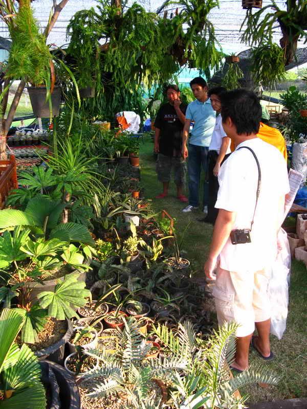 Флора фестиваль  в Тайланде Img_1320