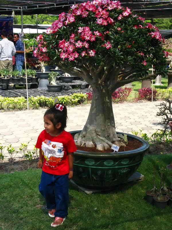 Флора фестиваль  в Тайланде Img_1410