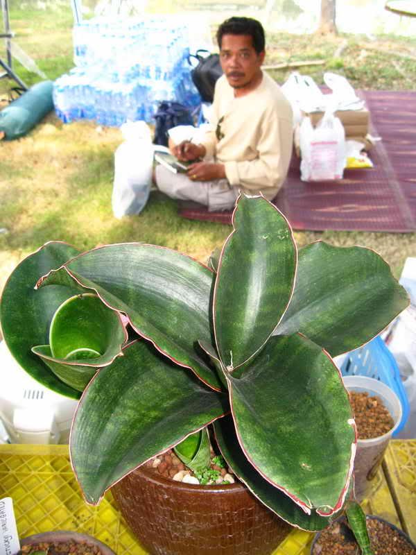 Флора фестиваль  в Тайланде Img_1413