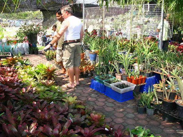 Флора фестиваль  в Тайланде Img_1418