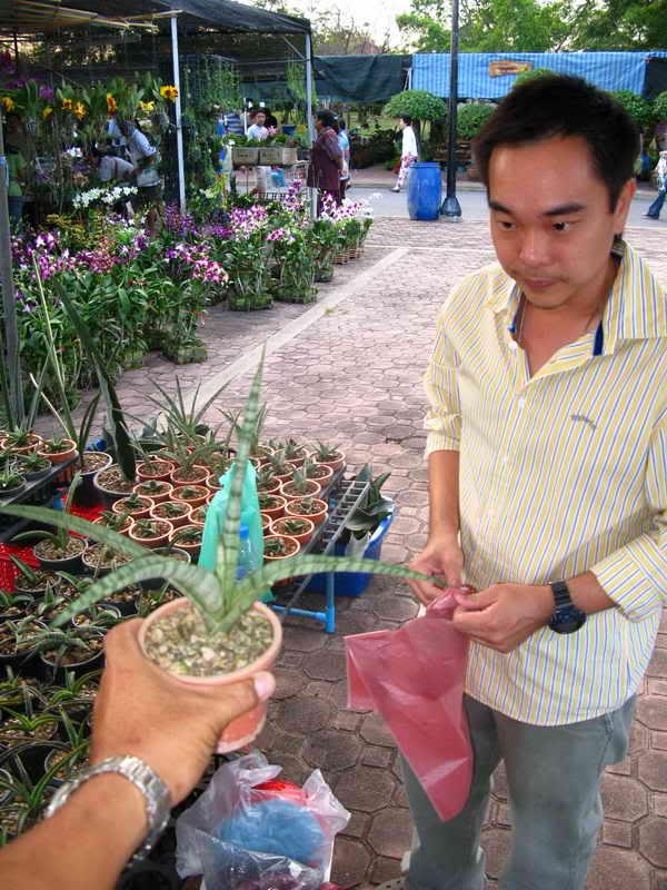 Флора фестиваль  в Тайланде Img_1611