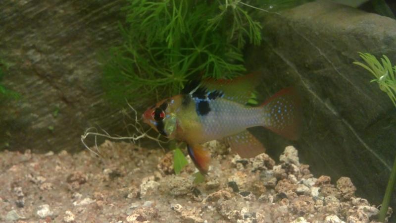 """Concours photos """"le poisson et son environnement aquatique"""" - Oscar le poisson  - Page 3 20062010"""