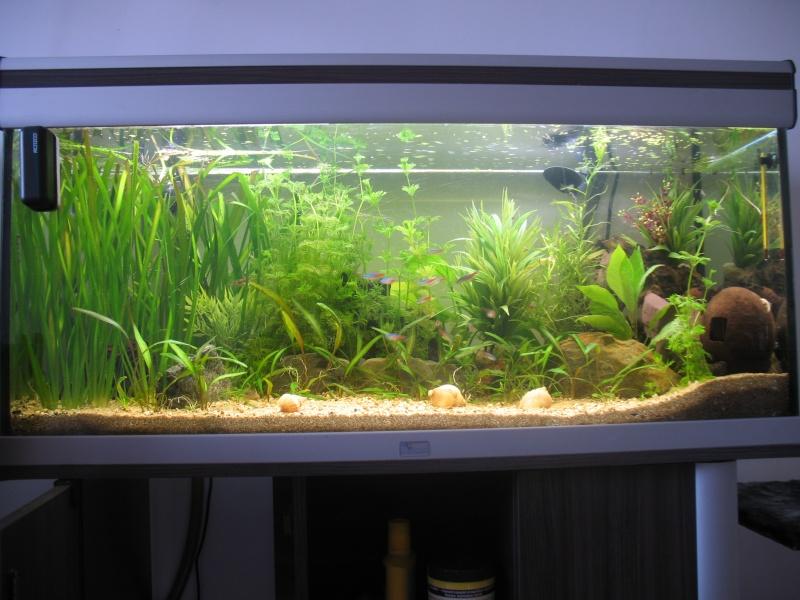 le ramirezi change de comportement suite à la refection de son environnement aquatique Img_3813