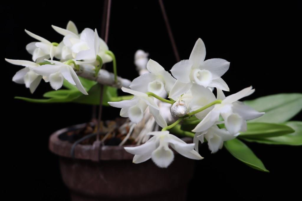 Orchideen 3 (fortlaufende Seiten 300 bis 400) - Seite 74 Img_0810