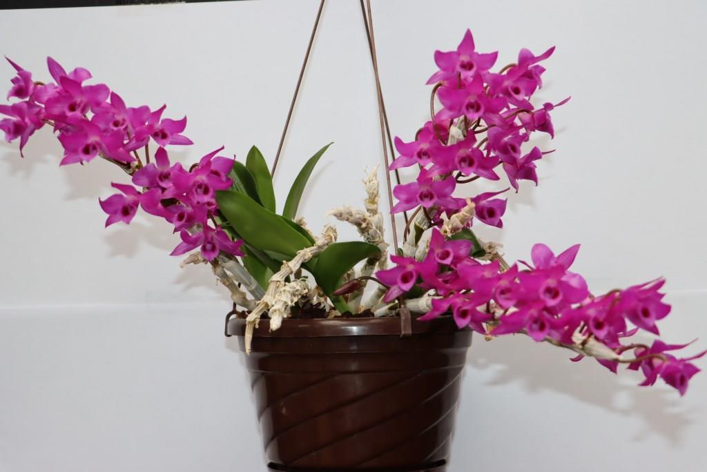 Orchideen 3 (fortlaufende Seiten 300 bis 400) - Seite 74 Img_0812
