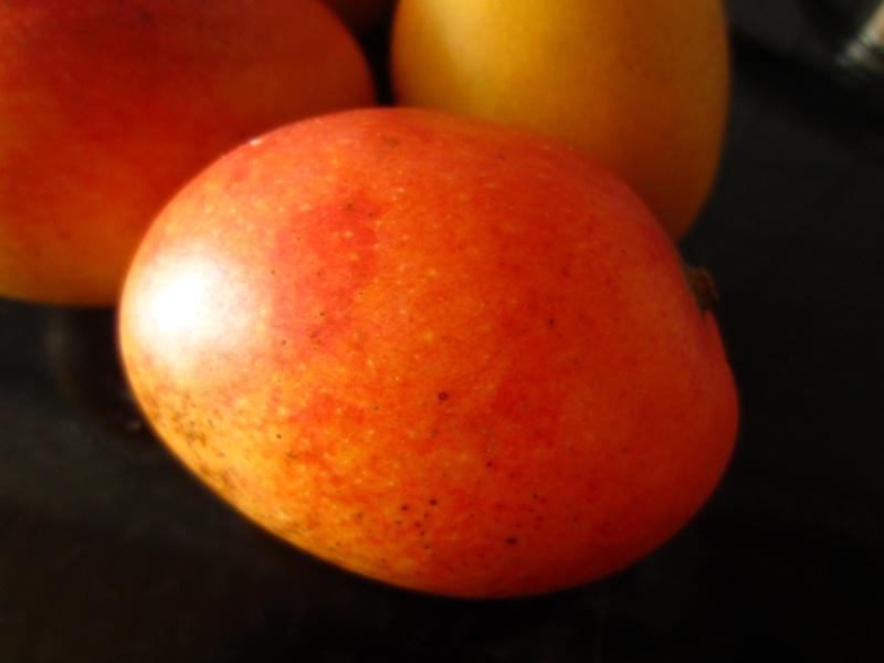 "Mangues ""sauvages"" de colombie Img_1911"