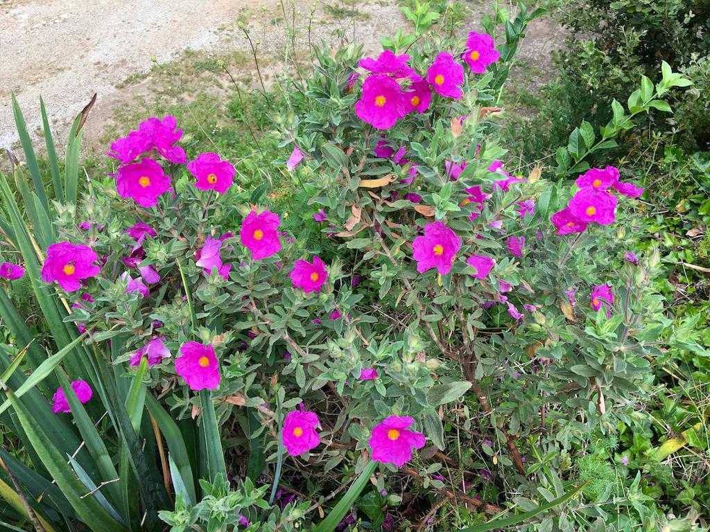 Air d'été au jardin Ciste_10