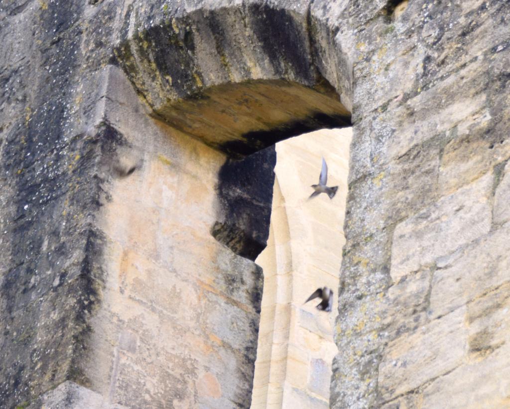 les visiteurs à plumes sauvages - 3 - Page 3 Dsc_0437