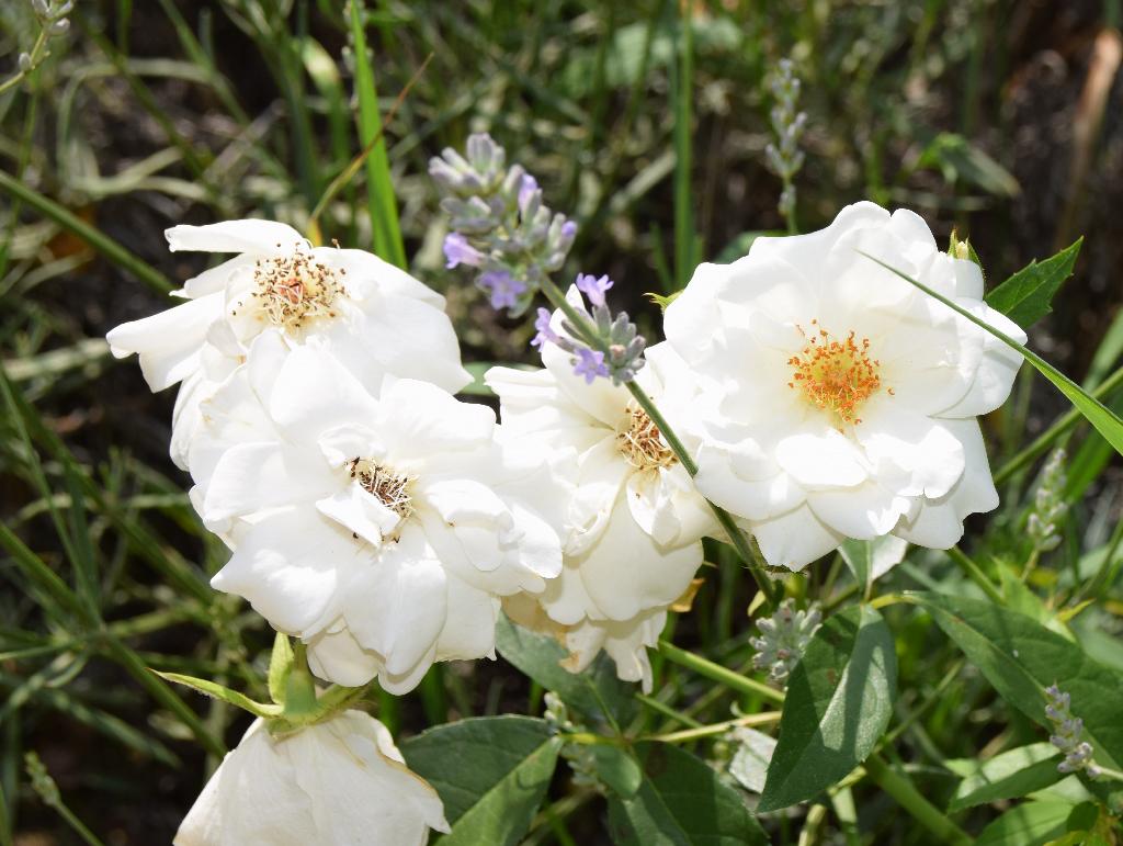chaleureuses floraisons Dsc_0820