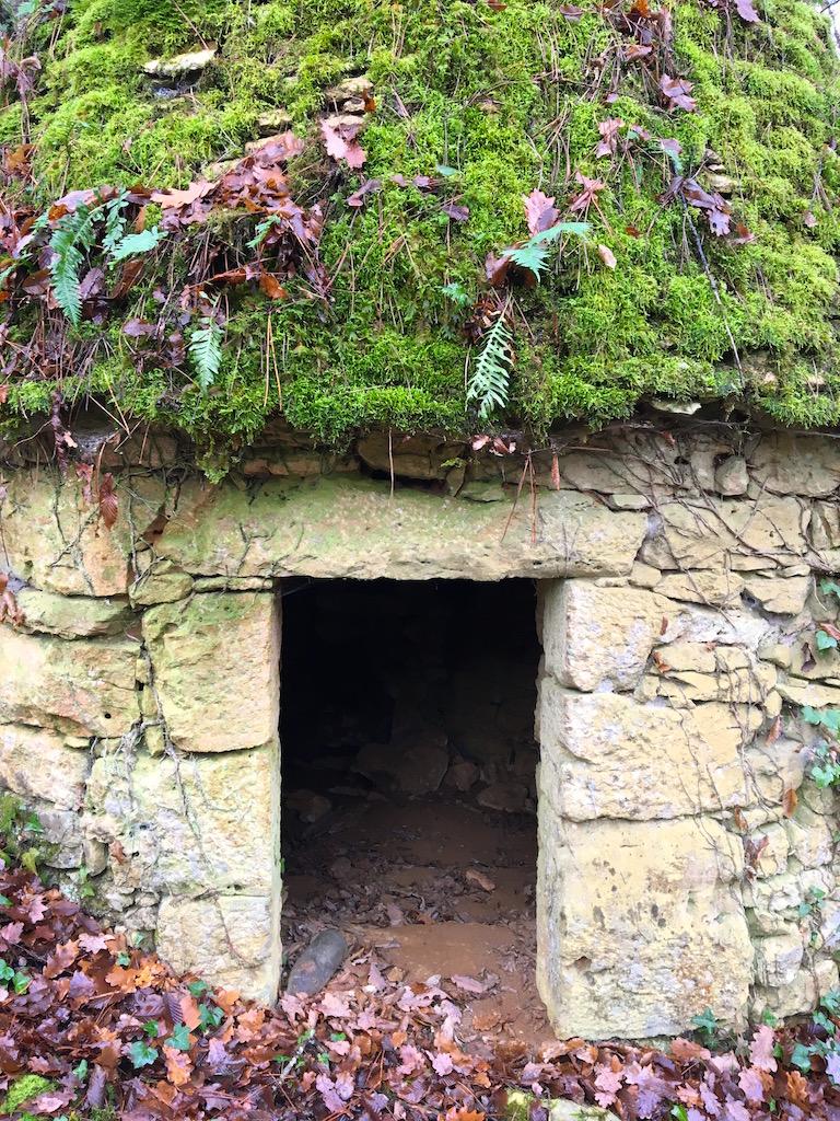 Mousses, lichens et autres fantaisies de l'hiver Img_0018