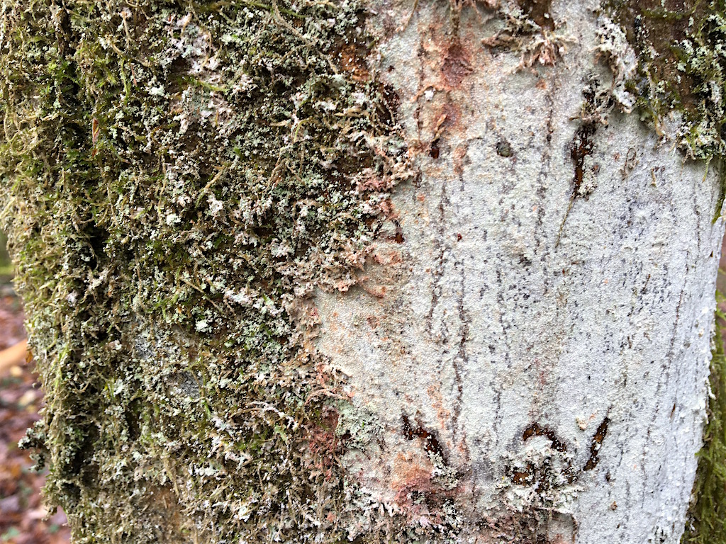 Mousses, lichens et autres fantaisies de l'hiver Img_0111