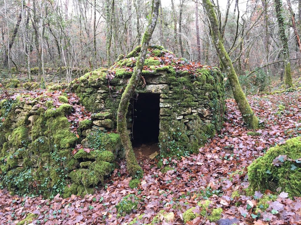 Mousses, lichens et autres fantaisies de l'hiver Img_0113
