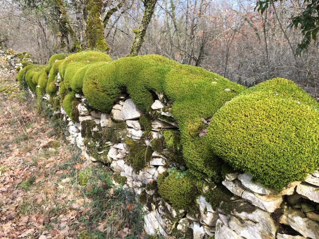 Mousses, lichens et autres fantaisies de l'hiver Img_0315
