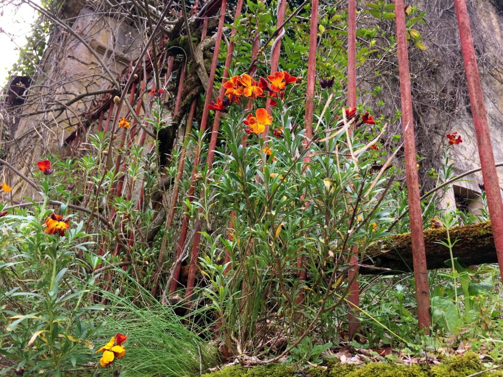 flore des vieux murs, rochers  et rocailles naturelles - Page 8 Img_0616