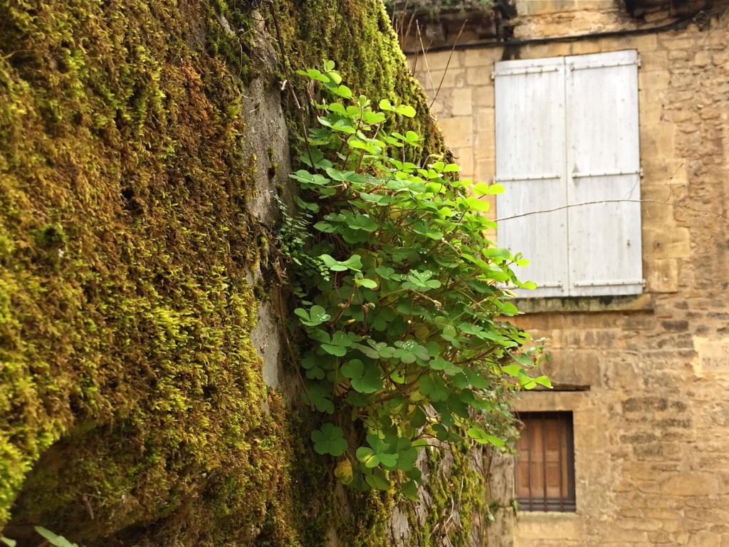 flore des vieux murs, rochers  et rocailles naturelles - Page 8 Img_0617
