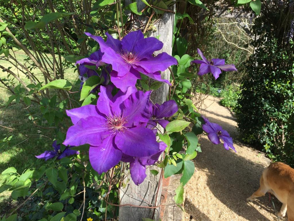 (24) Les Jardins d'Eau - Carsac-Aillac (Sarlat) - Page 2 Img_0638