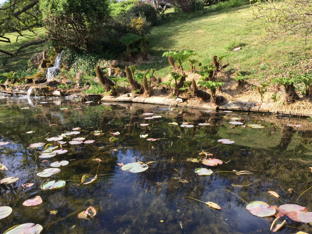 (24) Les Jardins d'Eau - Carsac-Aillac (Sarlat) - Page 2 Img_0640