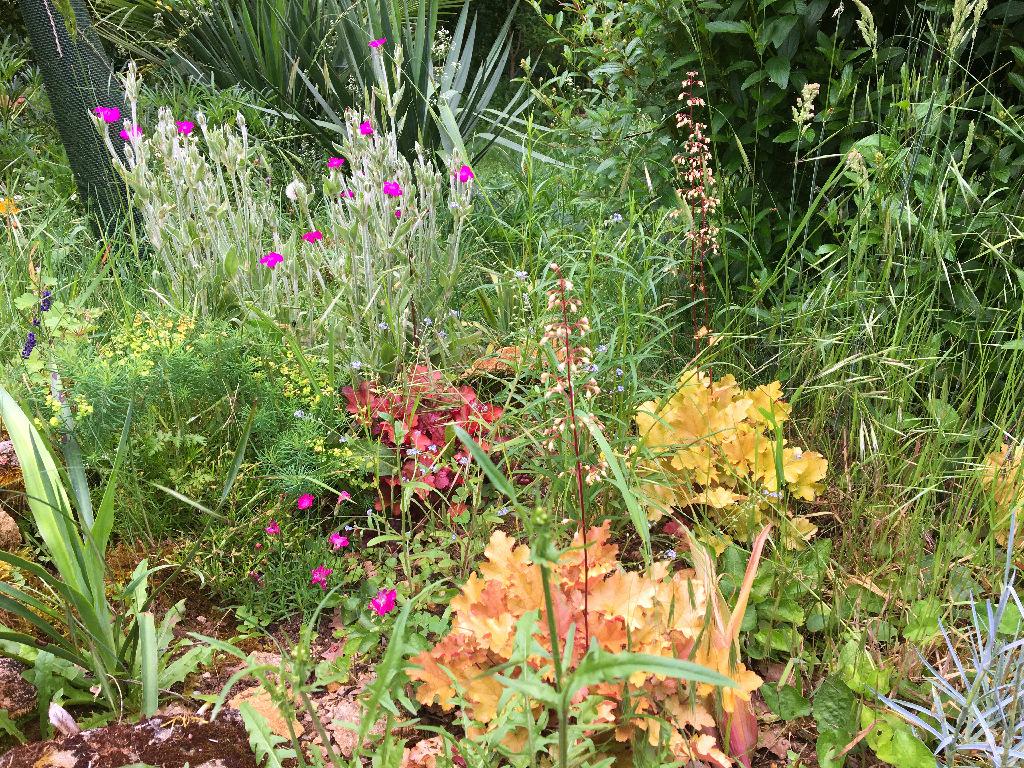 Air d'été au jardin Img_0826