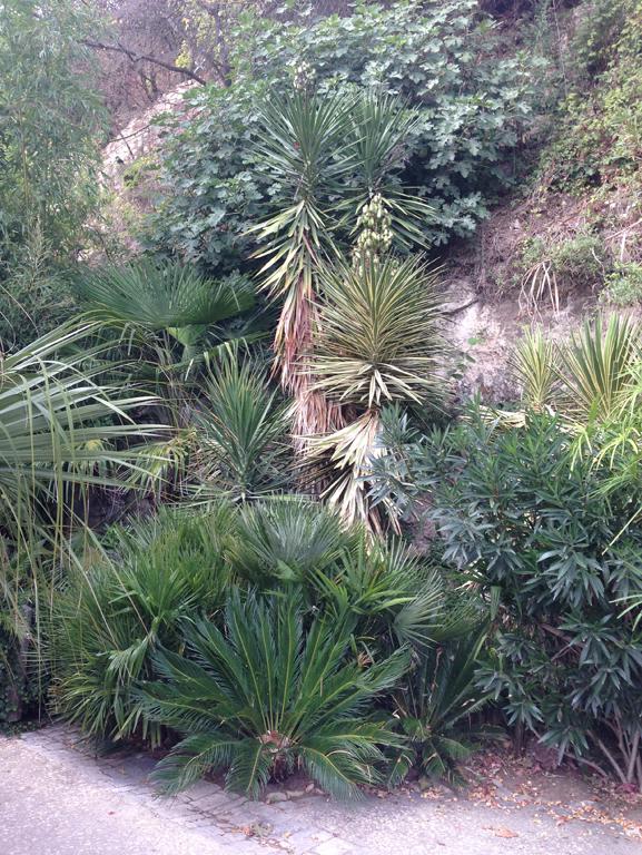 (24) Petit jardin exotique à la Roque-Gageac Img_4015